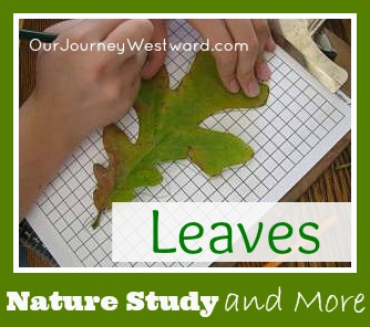 Nature Study and More with Leaves   Our Journey Westward