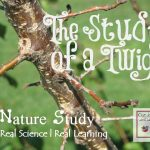 The Study of a Twig