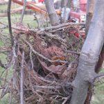 Nest of Seasons Past