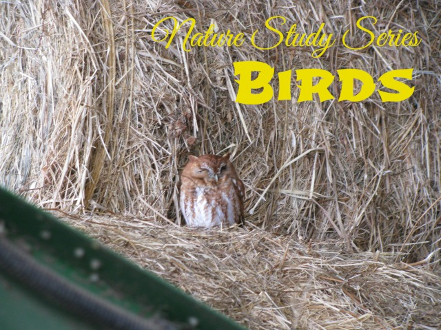 Nature Study: Birds