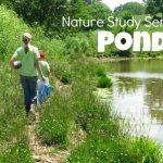 Nature Study – Ponds