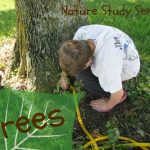 Nature Study – Trees