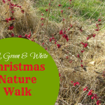 Christmas Nature Study: A Red, Green and White Walk