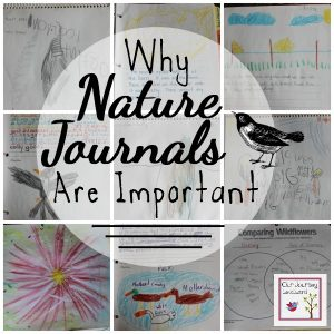 We have been utilizing nature journals in our homeschool from a very early age.  They have helped our children with writing, art, noticing nature detail and much more.
