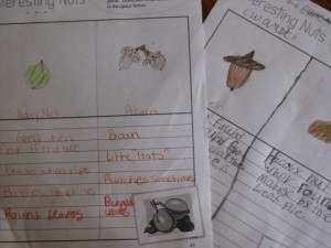 Nature Notebooking and Read-Alouds