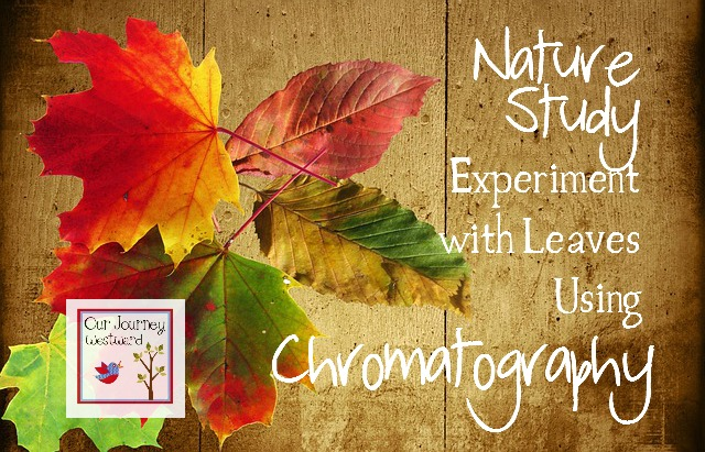 Chromatography with Leaves: A Nature Study Experiment