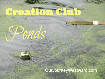 Creation Club Pond Study | Our Journey Westward