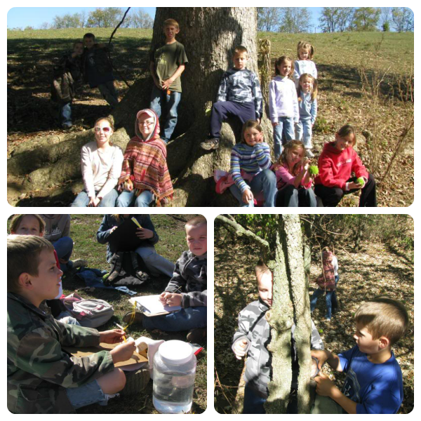 Creation Club Deciduous Trees Activities