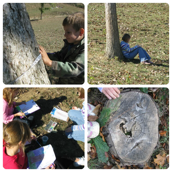 Deciduous Trees Creation Club Activities