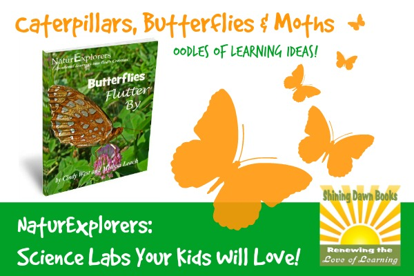 Butterflies Flutter By NaturExplorers Study