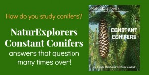 Constant Conifers is packed full of ideas for a nature study themed unit on conifers