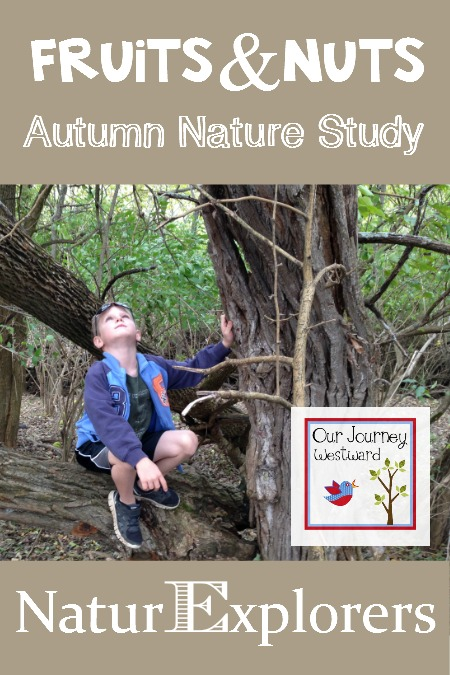 Fruits and Nuts are the perfect nature study topic for autumn