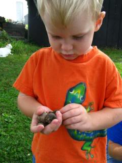Nature Study with a Toddler or Preschooler