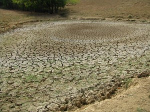 Signs of Drought