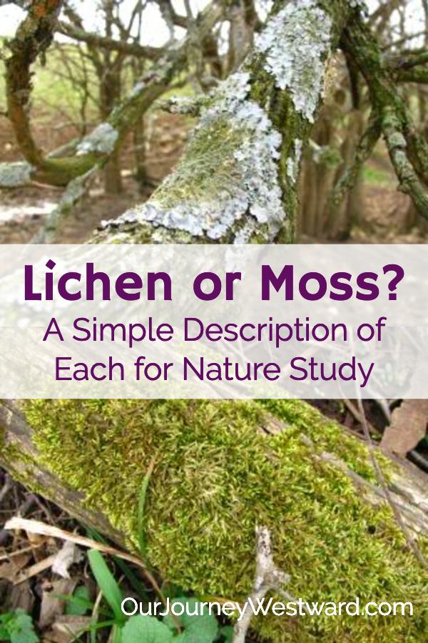 Lichen vs. Moss