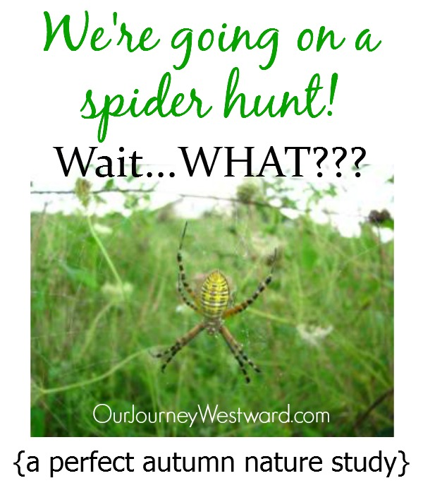 Spiders are the perfect nature study topic for fall - even if you're afraid of them!