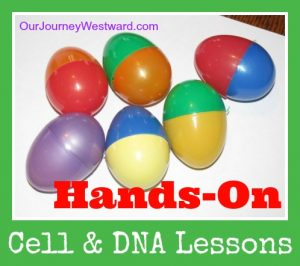 Cells and DNA: Hands On Lessons | Our Journey Westward