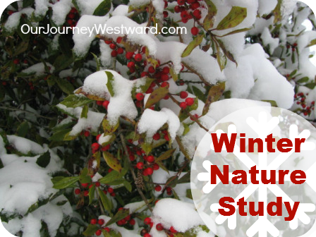 Winter Nature Study is FUN | Our Journey Westward