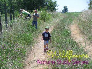 Nature Study – Wildflowers