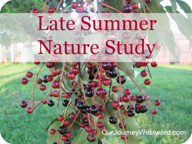 August Nature Study | Our Journey Westward