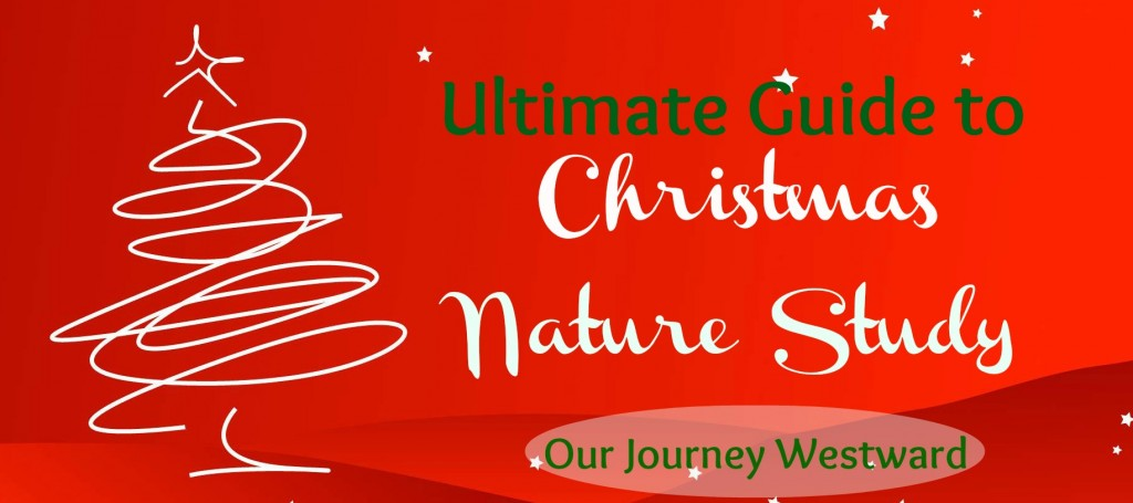 Christmas Nature Study Ideas Galore