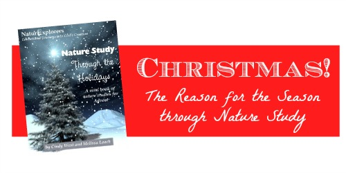 Nature Study Through the Holidays: Advent - An easy, excitiing, way to point your children to the One this Christmas season.