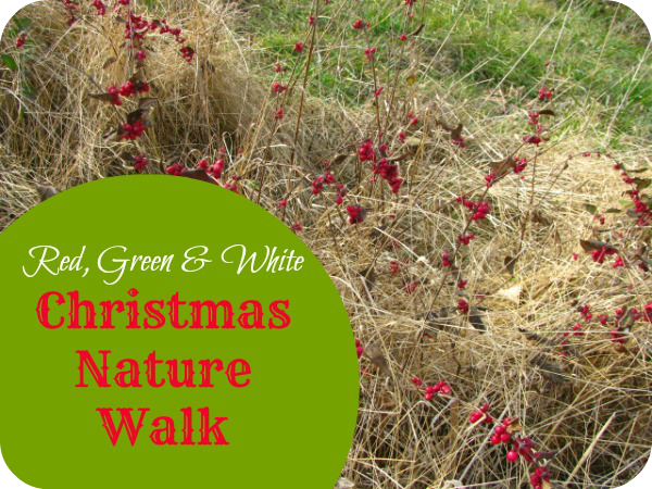 A holiday themed nature walk is just what the busy Christmas season needs.