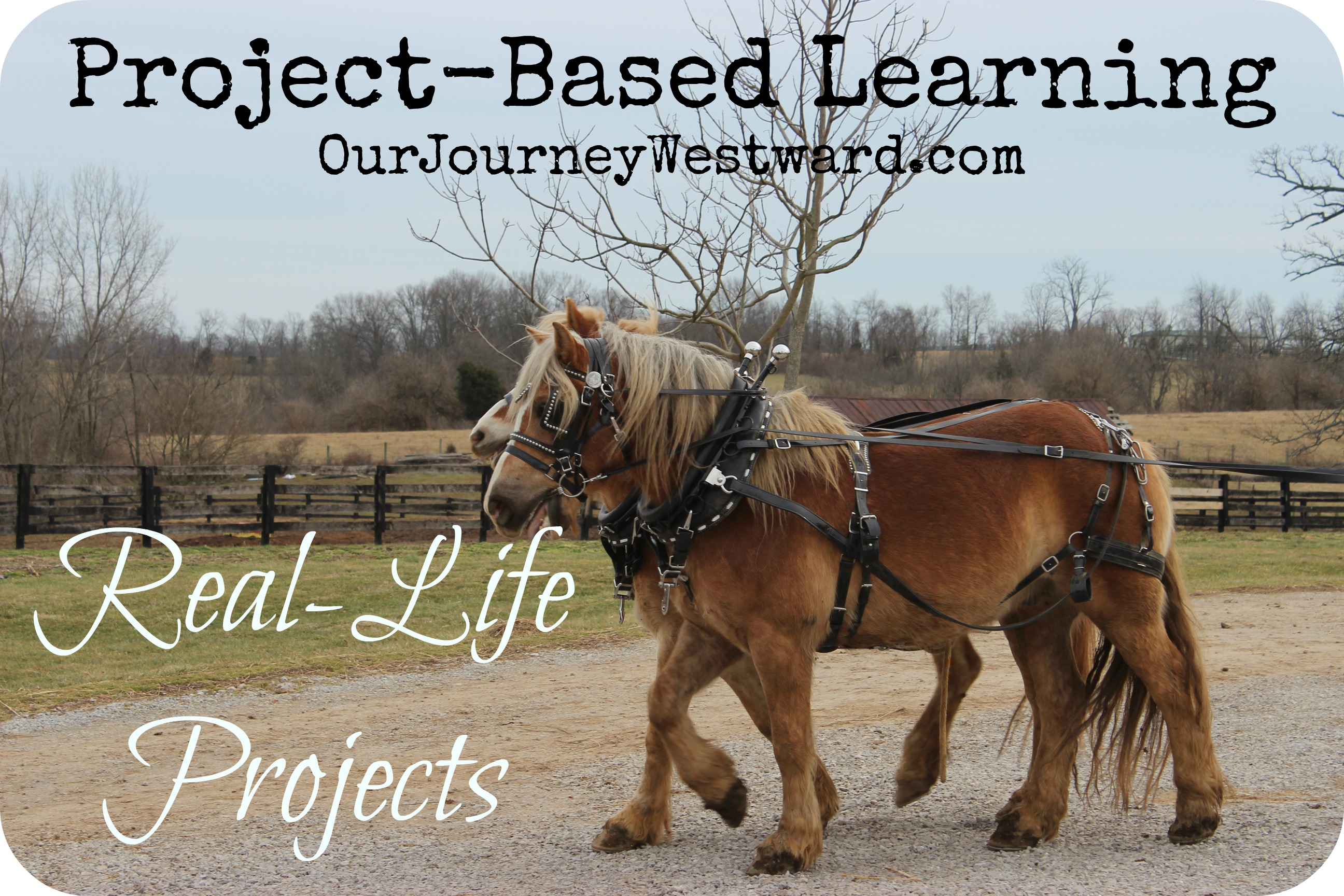 Project-Based Learning: Real Life