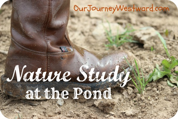 Pond Nature Study