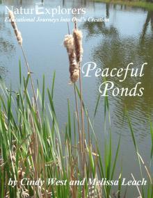 NaturExplorers Peaceful Ponds