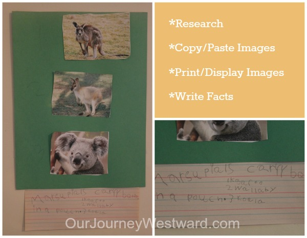 Marsupial Research and Writing Project | Australia Unit