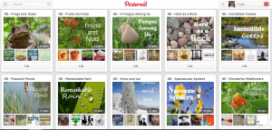Cindy's Pinterest Board
