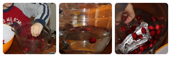 Exploring cranberries - a literature linked science study from Our Journey Westward