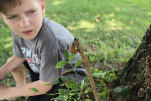 A 2nd Grade Nature Study: Insects