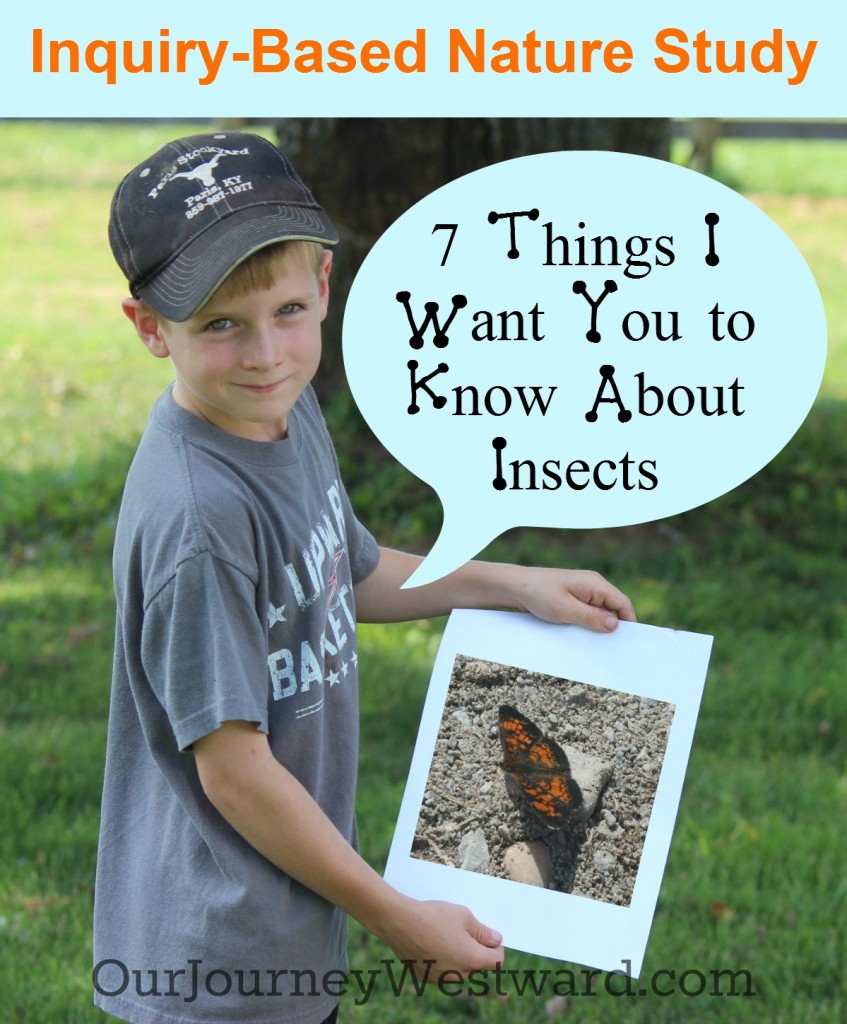 Inquiry-based nature study is a great way to learn about insects. Nature walk activities and living literature suggestions are included!