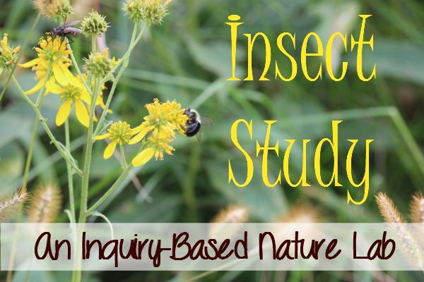 My 2nd grader enjoyed an inquiry-based insect study with nature as his learning lab.  We read a lot of living literature, too.