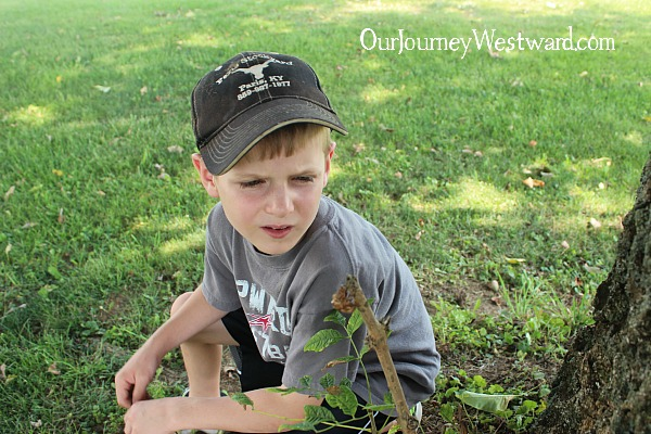 Studying nature has been such an important part our our homeschool.  See why!