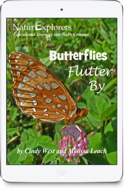 Butterfly nature study is fun and easy with NaturExplorers! Indoor and outdoor activities make for a comprehensive study of these amazing insects!