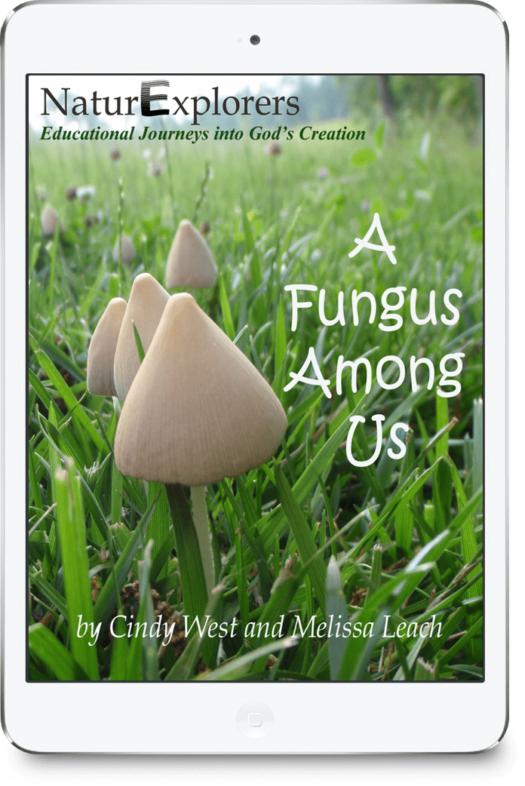 Tons of creative nature walks to study fungi! Hands-on activities and kid-friendly research-based projects, too!
