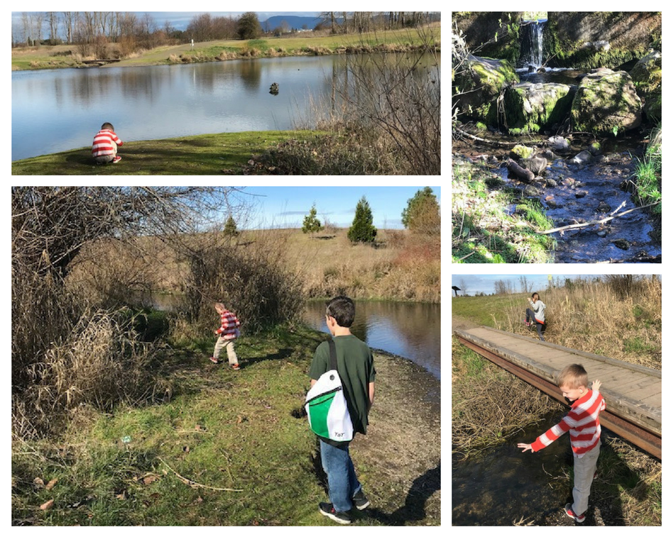 A day in the life of nature study at the pond