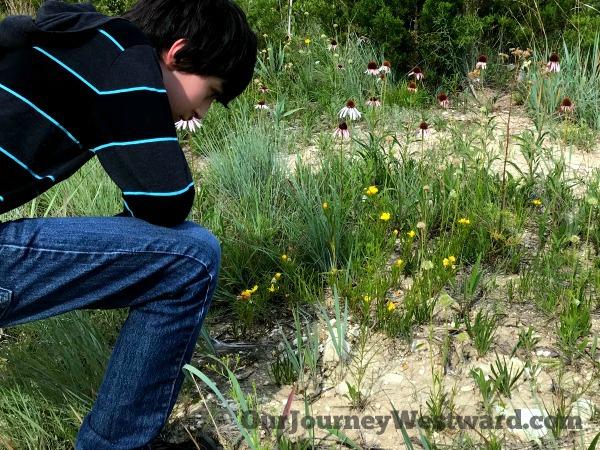 How To Teach an Interest-Based Nature Study #naturestudy #homeschoolscience