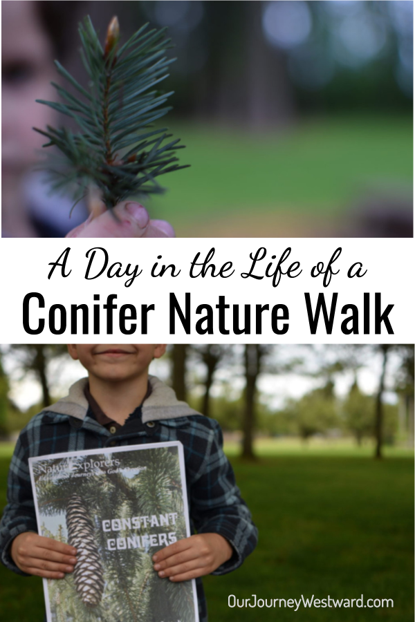 Do you ever wonder what a real nature walk looks like? Go along with one family as they go on a conifer nature walk and make several new discoveries.