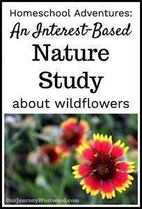See how one mom led an interest-based wildflowers nature study #homeschool #science