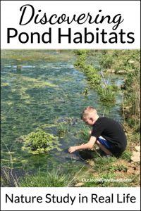 Take a peek into a real-life pond habitats nature study with a homeschool family of multiple ages who spent several weeks learning about ponds in their hometown. #naturestudy