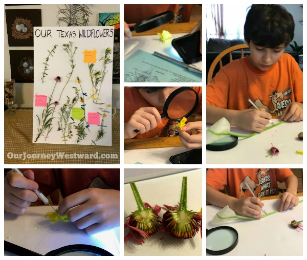 How To Teach an Interest-Based Nature Study #naturestudy #homeschoolscience