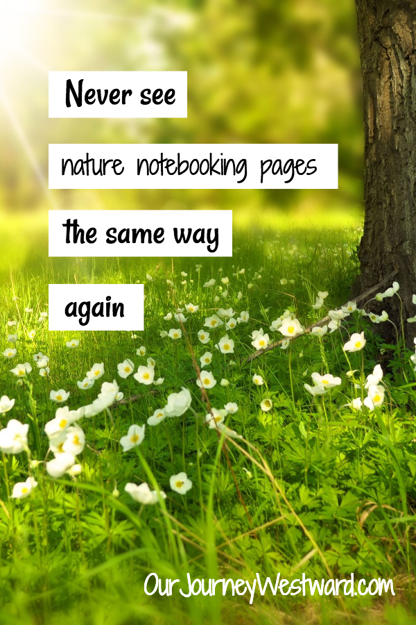 You'll Never Look at a Nature Notebooking Pages the Same Way Again