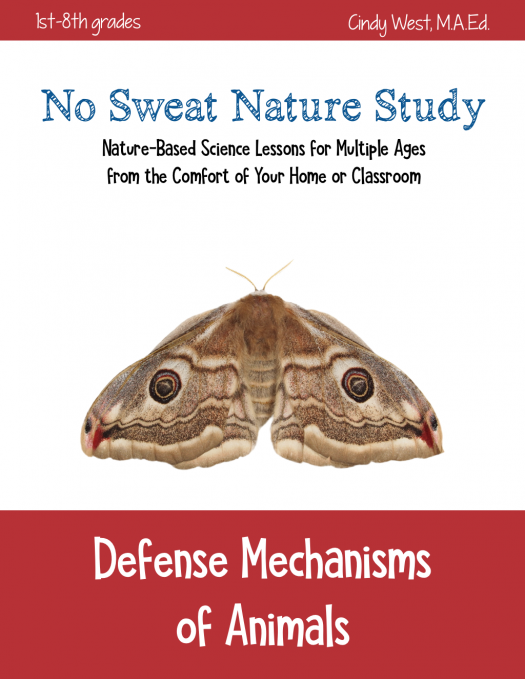 No Sweat Nature Study - a fabulous way to teach nature-based science to multiple ages! No need to go outdoors unless you want to!