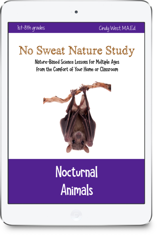 Nature study without going outside? Yes! Learn about nocturnal animals with all ages from the comfort of your home or classroom.