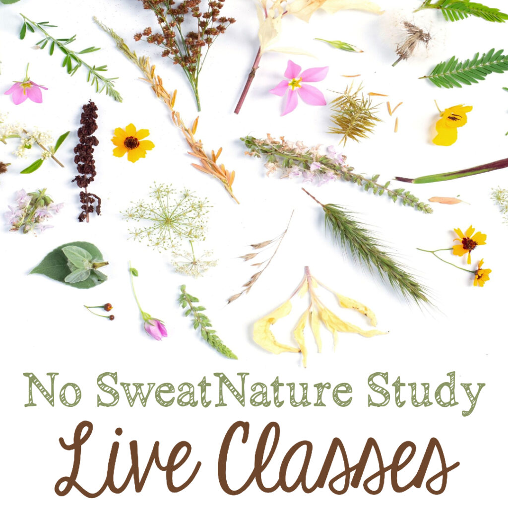Your 1st-8th graders will love these unique, interactive nature study lessons with Mrs. Cindy West!