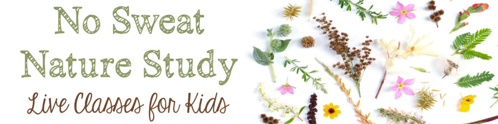 Live nature study classes for elementary and middle school students from teacher, author, and speaker Cindy West!